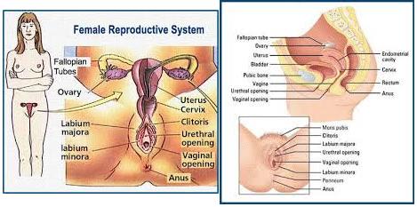 Female sex pics